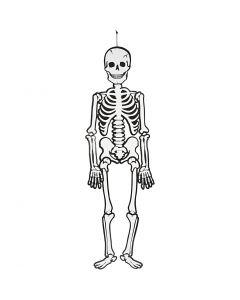 Skjelett, H: 120 cm, 300 g, hvit, 1 stk.