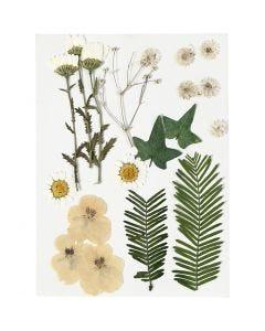 Tørkede blomster og blad, råhvit, 19 ass./ 1 pk.