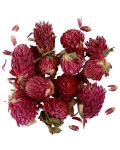 Tørkede blomster, Rødkløver, L: 1,5-2,5 cm, dia. 1 - 1,5 cm, lilla, 1 pk.
