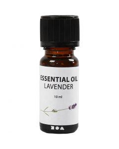 Duft olje, Lavendel, 10 ml, 10 ml/ 1 fl.