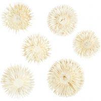 Tørkede blomsterhoder, dia. 3-5 cm, 6 stk./ 1 pk.