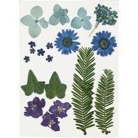 Tørkede blomster og blad, blå, 19 ass./ 1 pk.
