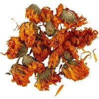 Tørkede blomster, Ringblomster, dia. 1 - 1,5 cm, gylden, 1 pk.